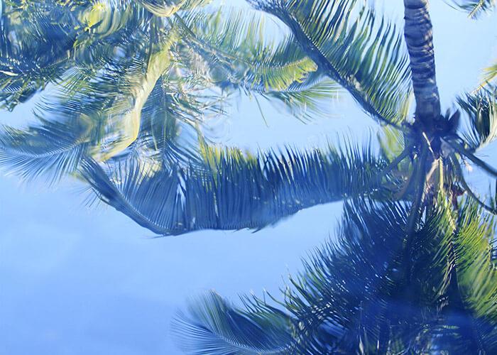 Raffles Traveller Palm