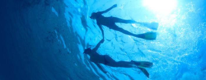 Itinéraire3: La vie aquatique