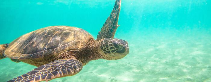 Île Aride au Raffles Seychelles