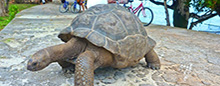Curieuse au Raffles Seychelles