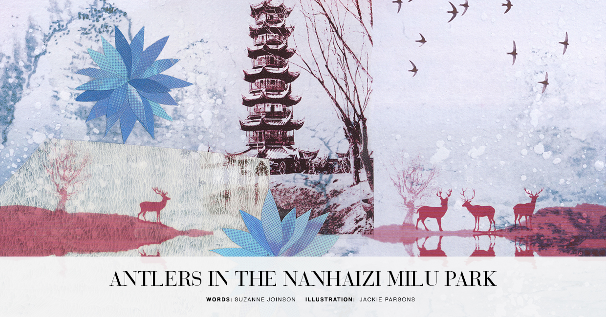 Antlers in the Park - An original, Beijing-inspired short story from Suzy Joinson