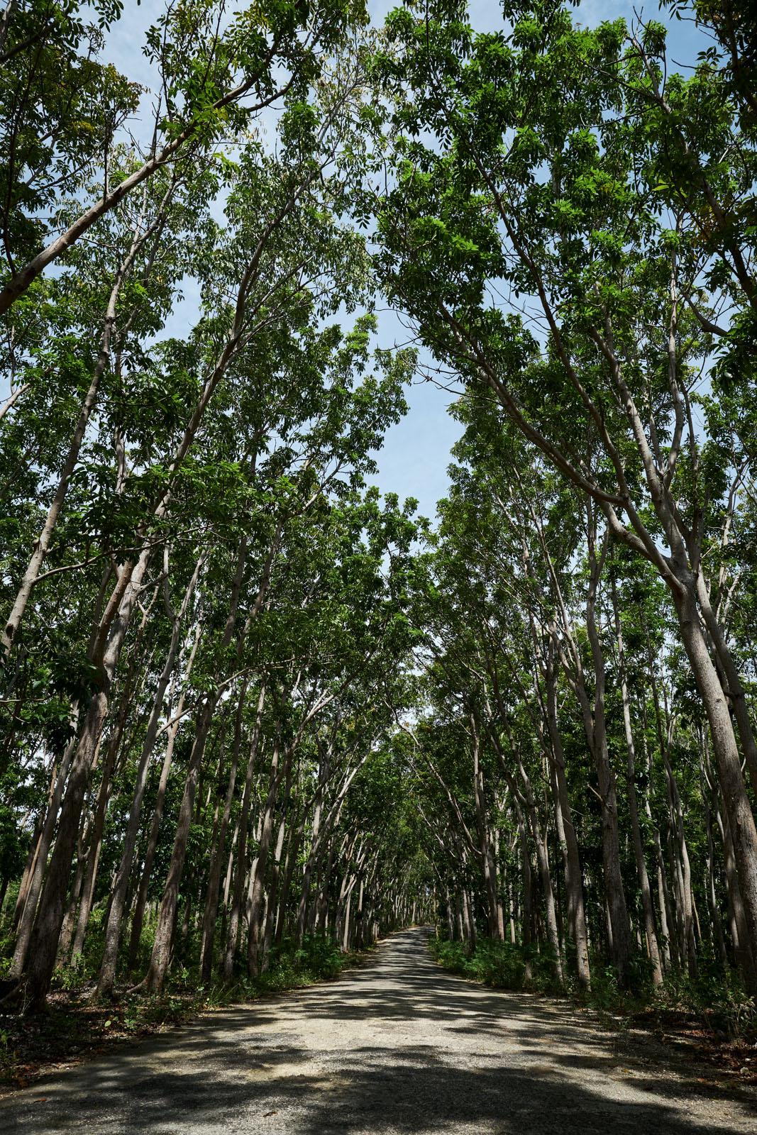 exotic, tropical vegetation provides shade for the traveller